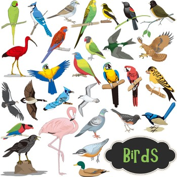 Digital Bird Clip Art Birds Collection - Colored and B&W Outlined