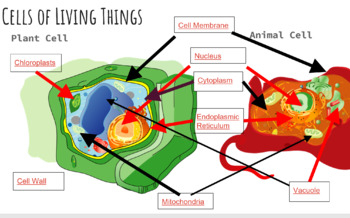 Animal and Plant Cell Digital Interactive Project