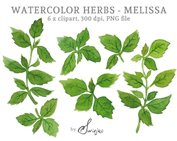 Digital Clipart, Watercolor Herbs, herbarium, melissa