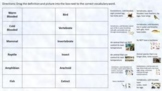 Digital / Distance Learning: Animal Classification Vocabul