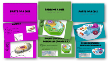 Digital Interactive Notebook - Cell Structure and Function