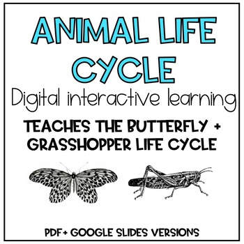 Digital Life Cycles of a Grasshopper and Butterfly