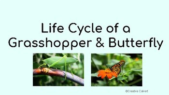 Life Cycle of a Grasshopper and Butterfly Google Drive *DIGITAL*