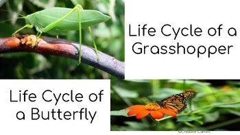 Animal Life Cycle Digital Interactive Resource