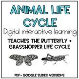Animal Life Cycle Digital Interactive Resource