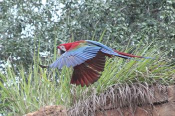 Digital Photos Eagle Owl Peacock