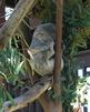 Digital Photos Lion Elephant Koala Panda and more