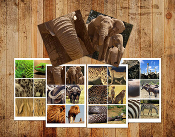 Digital Printable Montessori Go Togethers - Safari Animals
