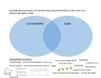 digital venn diagram for carbohydrates & lipids comparison by sciencerush