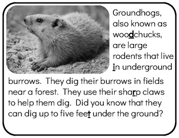 Digital Version - Unlock the Box: All About Groundhogs