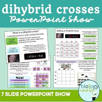 Dihybrid Cross PowerPoint Notes FREEBIE