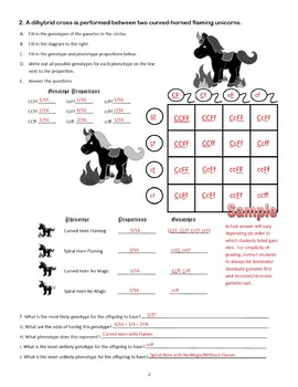 Dihybrid Crosses (F1 Dihybrid Cross Worksheet) by Cynthia ...