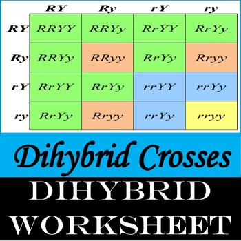 Dihybrid Crosses(Genetics)