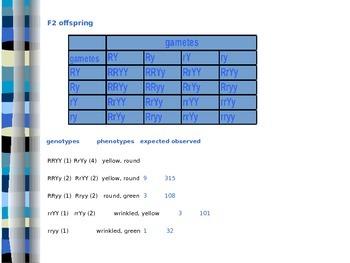 Dihybrid Inheritance Explored (Genetics) - Presentation/Handout