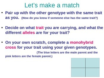 Dihybrid Lecture PPT