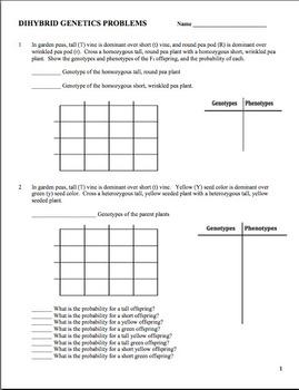 Genetics: Dihybrid Punnett Square Practice Problem Worksheet | TpT