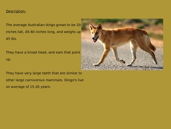 Dingo - Power Point - Information Facts Pictures History Review