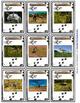 Dinosaur Flash Cards Game