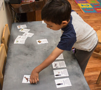 Dinosaur Cards