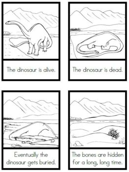 Dinosaur Fossil Sequence Cards
