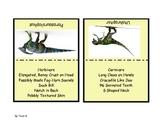 Dinosaur Matching or Display