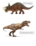 Dinosaur Picture Cards