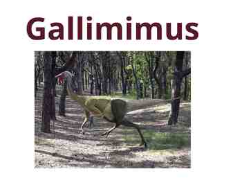 "Dinosaurs: Ornithomimids - ""The Bird Mimics"" (Prezi)"