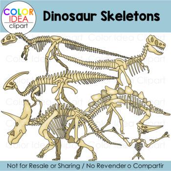 Dinosaur Skeletons Worksheets Teaching Resources Tpt