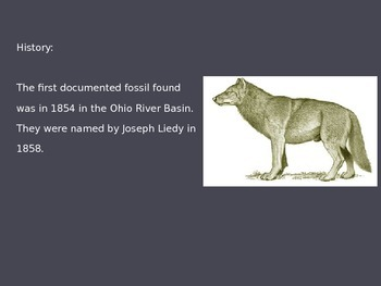 Dire Wolf - Power Point - Facts Pictures Information