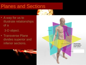Directional Vocabulary and Planes of the Body