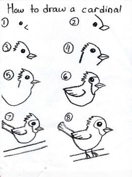 Directions to Draw a Cardinal Bird