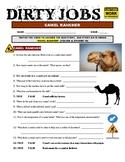 Dirty Jobs : Camel Rancher (science career video worksheet)