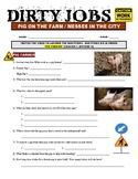 Dirty Jobs : Pig Farmer (career video worksheet)