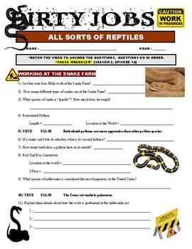 Dirty Jobs : Snake Wrangler (video worksheet)