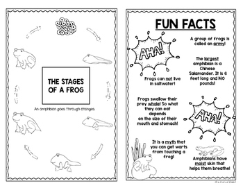 Discover Animals {Amphibians} Science Reader for First Grade & Kindergarten