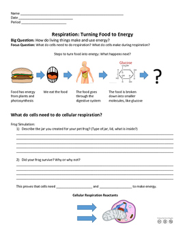 Discovering Cellular Respiration