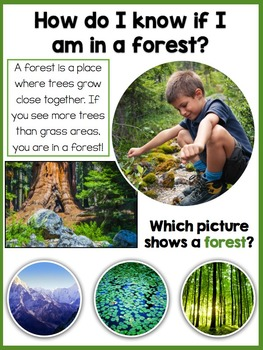Discovering Forests: a Preschool and Kindergarten pack