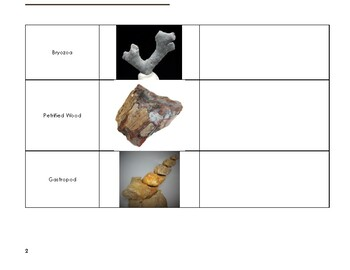 Discovering Fossils & Deposition