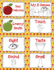 Discovering My 5 Senses with Apples