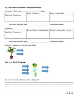 Discovering Photosynthesis