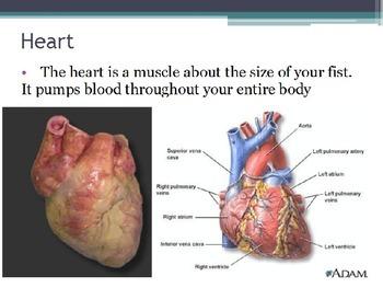 Diseases - Heart Disease (POWERPOINT)