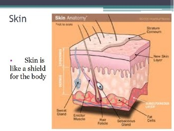 Diseases - How the Body Protects Itself (POWERPOINT)