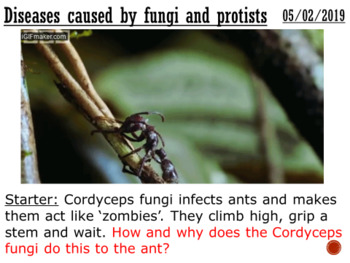 Diseases caused by fungi and protists - complete lesson