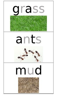 Disgusting Items for Year 1 Australian Curriculum English Unit 5
