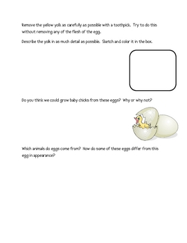 Dissection of an Egg Lab Packet (12 Total Pages)