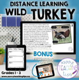 Distance Learning Animal Research  WILD TURKEY