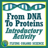 DNA and PROTEINS Activity Protein Synthesis Simplified