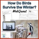 Adaptations How Do Birds Survive in Winter WebQuest