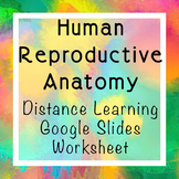 Human Reproductive Anatomy Conception Google Slides Worksheet