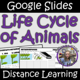 Distance Learning: Life Cycle of Animals (Google Slides)